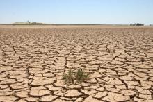 ۶۵ هزار هکتار از اراضی همدان بیابانی شده است