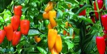 مشکلات متقاضیان احداث گلخانه در همدان بررسی شد/ ضرورت تحقق سهمیه ۱۱ هکتاری توسعه گلخانهای