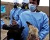 بیماری آنفولانزای فوق حاد پرندگان