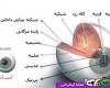 آناتومی  چشم انسان را بشناسید + عکس