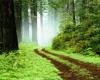 بهره برداری از 14 طرح منابع طبیعی همدان در هفته دولت