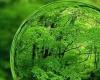 جشنواره فیلم سبز دغدغه حفظ محیط زیست را تقویت میکند