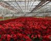 ایجاد 200 هکتار گلخانه تا سه سال آینده در همدان